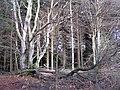 BUTGENBACH - Hohe Mark (1).jpg