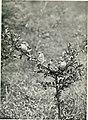 Baby birds at home (1912) (14564775748).jpg