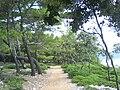 Badija02522.JPG