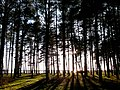 Baltiyskiy rayon, Konigsberg, Kaliningradskaya oblast', Russia - panoramio (53).jpg