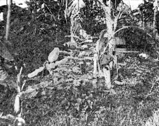 Battle of Tjiater Pass