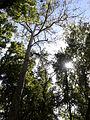 Banjička šuma 007.jpg