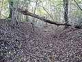 Bank and ditch on Ancient Fort in Mistleberry Woods - geograph.org.uk - 281149.jpg