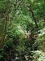 Barnhill Hall Lane - geograph.org.uk - 471934.jpg