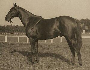 Battleship (horse) - Image: Battleship USA horse