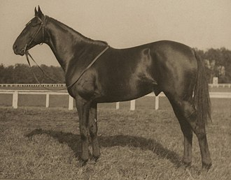 Grand National - Battleship is the only horse to win both the American Grand National and the English Grand National steeplechase races