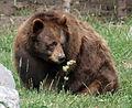 Bear (1414227832).jpg