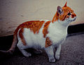 Beautiful Orange Cat.jpg