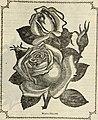 Beautiful flowers for 1888 (1888) (19737921933).jpg