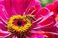 Bee (122684201).jpeg
