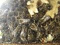 Beehive-inside.jpg
