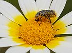 Beetle April 2010-3.jpg