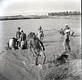 Beit Zera 1950 in the 50s Fisher Men working about 1950.jpg