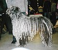 Bergamasco Sheepdog.jpg