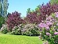 Berlin - Gaerten der Welt - Fruehling (Gardens of the World - Springtime) - geo.hlipp.de - 36585.jpg