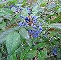 Berries DSC01117.JPG