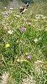 Bieltal-Wanderer-Blumen-01.jpg