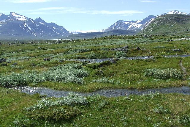 Tundravegetation i Sarek.