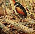 Bird lore (1919) (14747142881).jpg