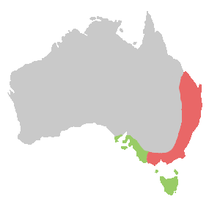 A map of Australia, showing the range of the yellow-tailed black cockatoo. There is a red region representing the range of the Eastern subspecies along the east coast and near-coast covering the bottom two thirds of the eastern coastline, and also the southern coastline and nearby regions to the north of Tasmania. A pale green zone representing the range of the Southern subspecies covers Tasmania and a part of southern coastline immediately to the west of the bottom of the red zone.