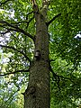 Birdbox number 42 in Bourne Woods (geograph 6520540).jpg