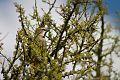 Birding Las Grutas 02.jpg