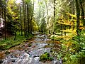 Black Forest- stream (10561878795).jpg