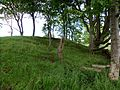 Black Law Motte, Blacklawhill, East Ayrshire, Scotland. Tree cover.jpg