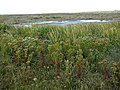 Blakeney Spit - geograph.org.uk - 980805.jpg