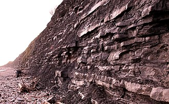 Early Jurassic - Lias formations at Lyme Regis, UK, known locally as Blue Lias.