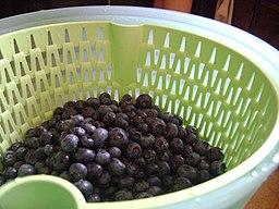 Blueberries (4812760575)