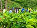Blur People's & Tea Trees.jpg