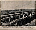 Boer War; rows of graves of enteric patients at Intombi, Lad Wellcome V0015636.jpg