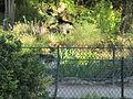 Bois de Vincennes (2014) 23.jpg