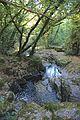 Bosque - Bertamirans - Rio Sar - 040.jpg
