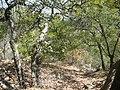 Bosque de encinos en el muerto - panoramio.jpg
