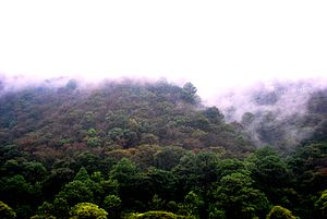 Central American pine-oak forests - Pine-oak forest in Chimaltenango, Guatemala