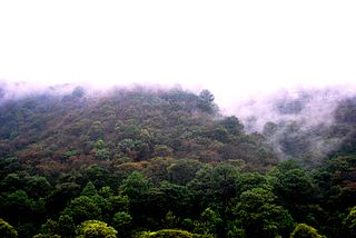 Central American pine-oak forests Ecoregion in Mexico and Central America
