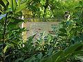 Botanička bašta Jevremovac, Beograd - Japanski vrt 02.jpg