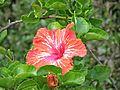 Botanični vrt (3990924098).jpg