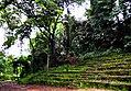 Botanic garden limbe93.jpg