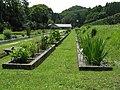 Botanical Gardens Faculty of Science Osaka City University3.jpg