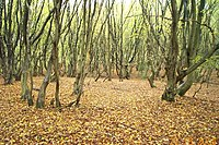 Bricket Wood Common - geograph.org.uk - 71828.jpg