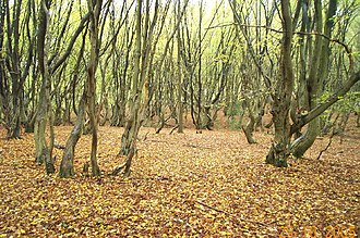 Bricket Wood - Image: Bricket Wood Common geograph.org.uk 71828