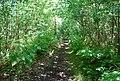 Bridleway, Oldbury Woods - geograph.org.uk - 856821.jpg