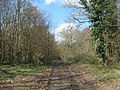 Bridleway in Charlton Wood - geograph.org.uk - 1779255.jpg