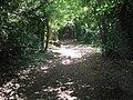 Bridleway in Hog Wood - geograph.org.uk - 1315014.jpg