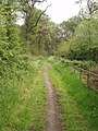 Bridleway in Mad Bess Wood - geograph.org.uk - 827725.jpg