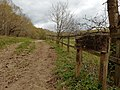 Bridleway in Middle Wood, Middlewood, Cheshire.jpg