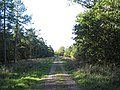 Bridleway through New Wood, south-east of Shire Hill Lodge - geograph.org.uk - 269281.jpg